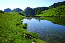Laghetto d'alta quota (Laghi di Moino) con presenza del raro coltellaccio natante, riconoscibile dalle lunghe e strette foglie galleggianti