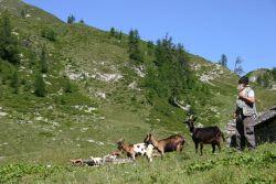 L'alpigiano Costante Bona all'alpe ...., alpeggio estivo dell'alta Valle Onsernone, sotto alla Bocchetta di Moino, comune di Craveggia